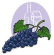 Ripe dark grapes