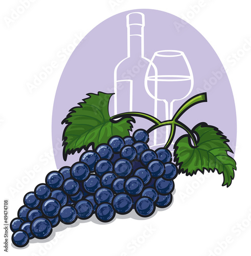 Ripe dark grapes