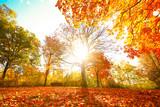 Fototapety Bunte Herbststimmung