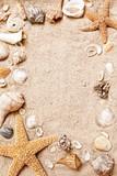 Fototapete Essbare blumen - Herzmuschel - Schalentiere