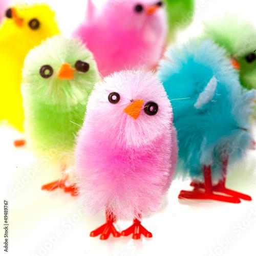 """""""u9ec3u8272""""]假期动物反思可爱的季节性孤立小鸡"""