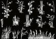Fototapeten,leaf,bambus,vektor,dekoration