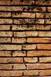 vertical orange antique old brick wall with black humid fungus