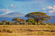 Fototapeten,baum,savanne,afrika,landschaft