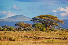 Krajobraz sawanny w Afryce, Amboseli, Kenia