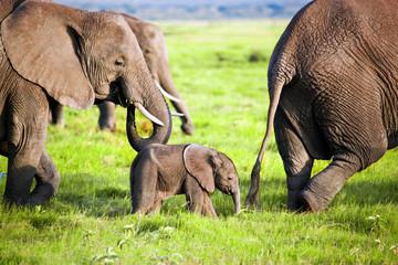 Elephants family on savanna. Safari in Amboseli, Kenya, Africa © Photocreo Bednarek