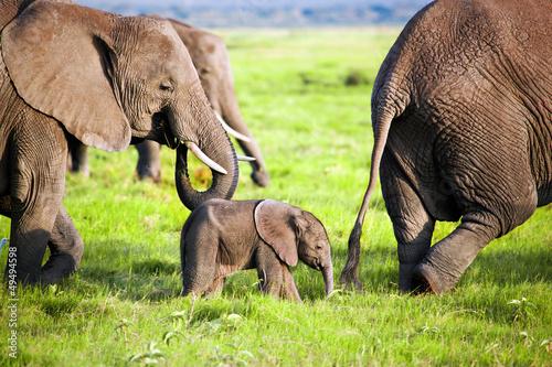 Elephants family on savanna. Safari in Amboseli, Kenya, Africa