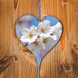 Ceriser en fleur, coeur en bois