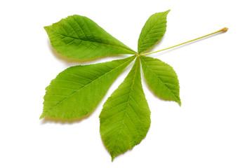 Spring leaf