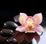 Fototapety Zen Stones and Orchid Flower. Stone Massage