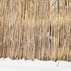 fence of dry cane in winter