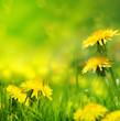Fototapeten,hintergrund,frühling,natur,grün