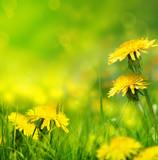 Fototapety Beautiful spring flowers background