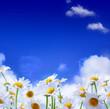 Fototapeten,hintergrund,frühling,blume,floral