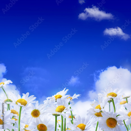 spring Field of daisies and blue sky background