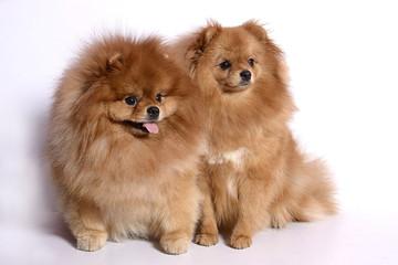 фото собака