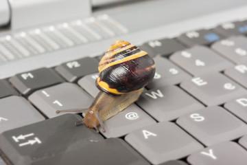 Drosselung bei LTE - Schnecke auf einer Tastatur