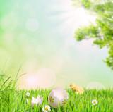 Osterei und Küken auf einer Frühlingswiese