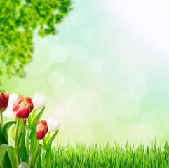 Frühlingserwachen auf dem Land