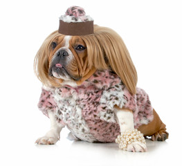 female bulldog