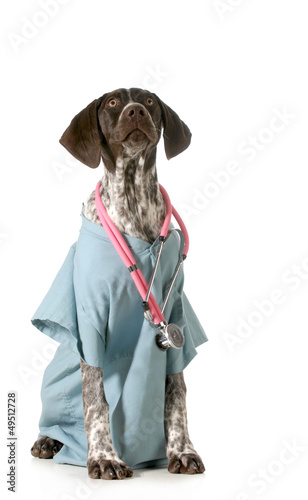 german shorthaired pointer vet