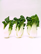 Bunch of Fresh baby bok choy, Brassica rapa chinensis,  isolated