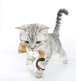 Fototapete Katze - Kätzchen - Haustiere