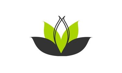 concept lotus