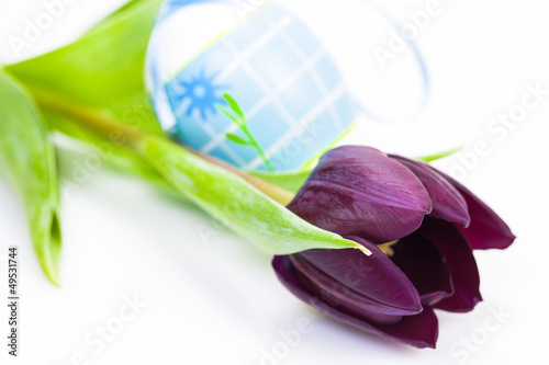 Easter egg and Purple Tulip Isolated on White Background.