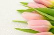 Mokre tulipany