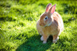 Easter rabbit on fresh green grass