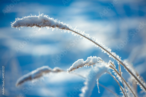 Hoarfrost on grass