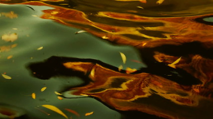 leaves floating on the waves
