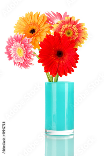 Beautiful Gerber flowers isolated on white