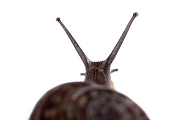 Snail's antennas