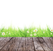 Spring meadow concept with wooden planks and white background