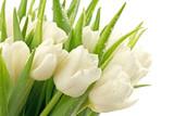 Tulipany © CUKMEN