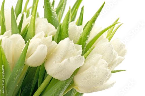 Foto op Canvas Tulp Tulipany