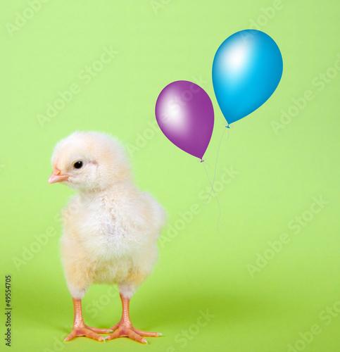 Küken mit Luftballon