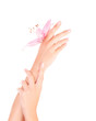 Female hands with pink lily