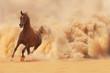 Leinwandbild Motiv Arabian horse running out of the Desert Storm