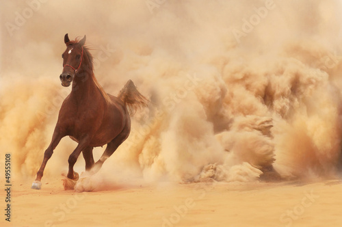 Poster Zandwoestijn Arabian horse running out of the Desert Storm