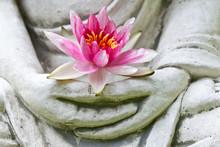 """Постер, картина, фотообои """"Buddha hands holding flower, close up"""""""