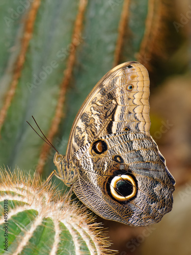 Tropical butterfly on cactus