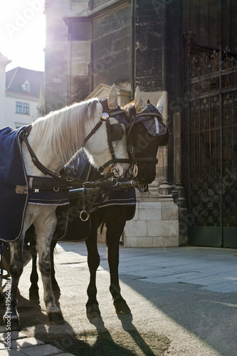 "Fiakerhorses in Front of ""Stephansdom Cathedral"" of Vienna"