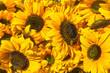 Sommerlicher Blumengruß, Sonnenblumen, Floristik
