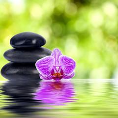 orquidea piedras y reflejo