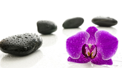 Massage stones and orchid flower with water drops