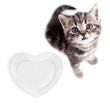Scottish or british gray kitten top view isolated