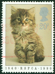 stamp printed in England showing a cat